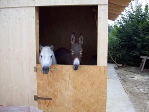 Liesel (Shetty) und Esi mit speziell für sie angefertigter Minitür ;-)