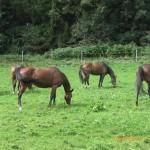 Bahati, Lyka, Missy, Mangal, Lucky auf der Auffangstation von Tanja